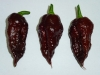 Bhut Jolokia Chocolate - fine frugter