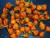 CGN 21566 - små frugter i starten af sæsonen