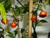 CGN 21566 - modne frugter