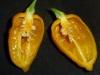 Devils Tongue Yellow - overskåret