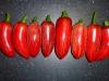 Jalapeño Coyame - modne frugter 2