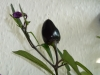 Peruvian Purple - modnende frugt
