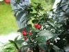 Royal Black - fine frugter