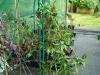 Takanotsume - klar til-høst 2