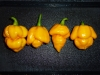 Trinidad Scorpion Morouga Yellow - moden frugt flere frugter