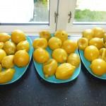 Citronmarmelade med chili - 4 kg kogte citroner køler af