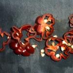Stegeben med rødvin og chili - chili skåret
